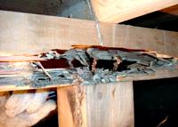 木造住宅の破壊者は「腐れ」と「シロアリ」です 郡山市 家づくり 大原工務店の家造りのこだわり