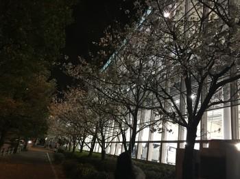 パレットタウン夜桜