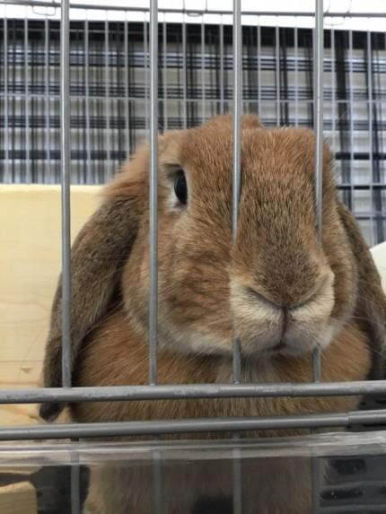 伊藤家のウサギです。|郡山市 新築住宅 大原工務店のブログ