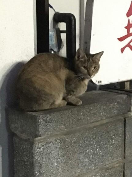 事務所の近くにいた猫と戯れました。郡山市安積町| 郡山市 新築住宅 大原工務店のブログ