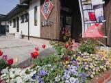 大原工務店の花壇にキレイなチューリップが咲いています。| 郡山市 新築住宅 大原工務店のブログ