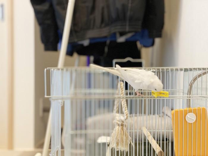 家を建てて小鳥を飼い始めたそうです 郡山市 新築住宅 大原工務店のブログ