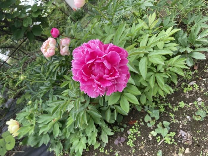 綺麗なお花が咲いてました!| 郡山市 新築住宅 大原工務店のブログ