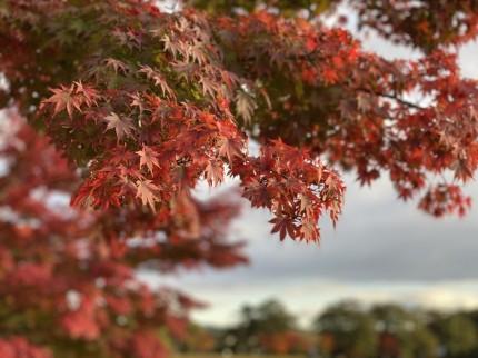南湖公園に紅葉を見に行ってきました。白河市| 郡山市 新築住宅 大原工務店のブログ