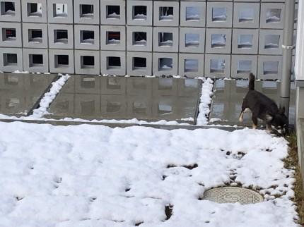 初雪と愛犬のチワワです。|郡山市 新築住宅 大原工務店のブログ