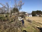 郡山市牛庭の梅の木伐採です。|郡山市 新築住宅 大原工務店のブログ