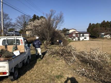 梅の木の伐採です。|郡山市 新築住宅 大原工務店のブログ