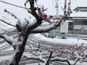 須賀川市 新築住宅 H様邸のカッコイイ窓をご紹介します!
