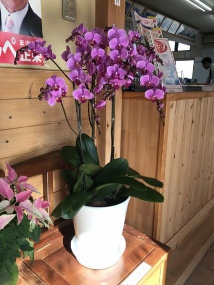 W様にお花を頂きました|郡山市 新築住宅 大原工務店のブログ