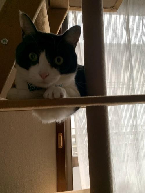 我が家の愛猫です。| 郡山市 新築住宅 大原工務店のブログ