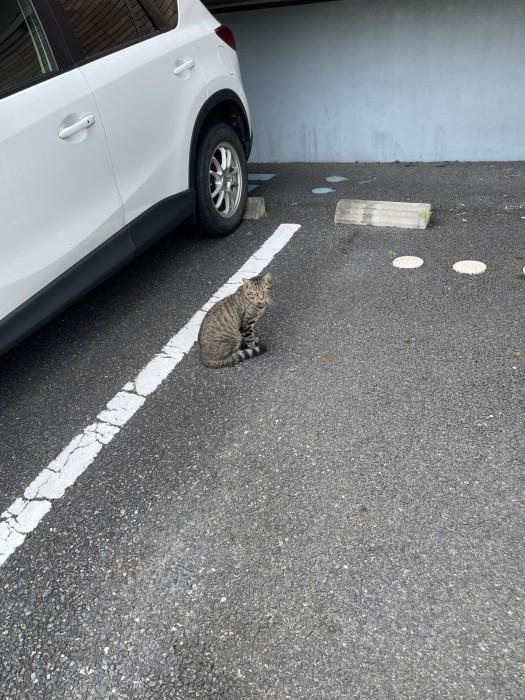 会社近くの猫ちゃんです。| 郡山市 新築住宅 大原工務店のブログ
