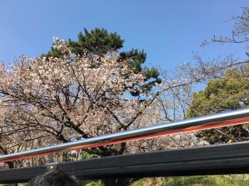 スカイバス桜