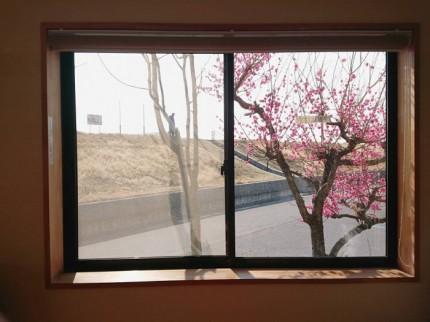 梅の花が綺麗に咲いています♪| 郡山市 新築住宅 大原工務店のブログ