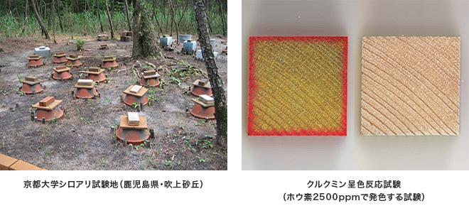 京都大学シロアリ試験地、クルクミン呈色反応試験 郡山市 家づくり 大原工務店の家造りのこだわり